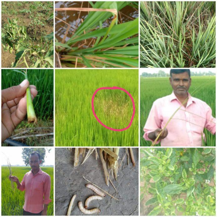 किसानों को फसल में कीट एवं रोग नियंत्रण की जानकारी दी