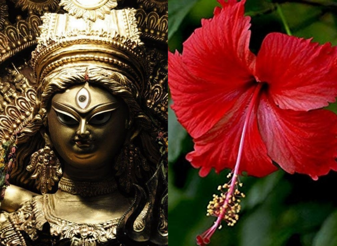 नवरात्रि में नौ तरह के पुषों से करें मां दुर्गा के नौ स्वरूपों की पूजा, मिलेगा आशीर्वाद, प्रसन्न रहेगा परिवार